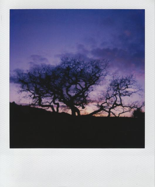 Cyrus Mahboubian polaroid8